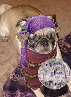 The Pug can predict your future.  Ask the Pug!
