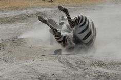 Africa Overland Tours: South East Explorer, Cape Town to Nairobi Nairobi, Cape Town, Africa, Tours, Explore, Afro