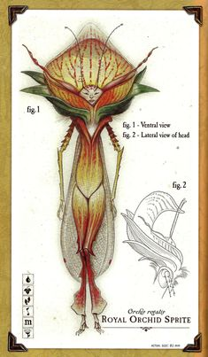 Care and Feeding of Sprites is a book written by Holly Black and illustrated by Tony DiTerlizzi...