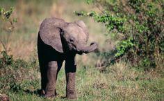 Baby Elephants Take Journalist on Extraordinary Adventure to Meet Wild Herd