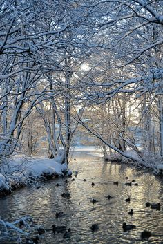 Ducks in Winter by Mjollnir MacAlba on – Winterbilder Winter Szenen, Winter Love, Winter Trees, Winter Photography, Landscape Photography, Nature Photography, Photography Tips, Travel Photography, Image Nature