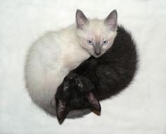 yin yang kittens like my cats bleach and clorox 2