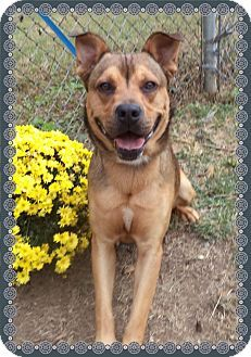 Marietta, GA - Boxer Mix. Meet MAX a Dog for Adoption.Act quickly to adopt MAX. Pets at this Shelter may be held for only a short time.