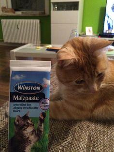 Mit #Malzpaste kannst Du Deiner Katze das Verdauen von Haarballen erleichtern...