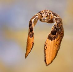 ~~experiments ~ owl in flight by Stefano Ronchi~~