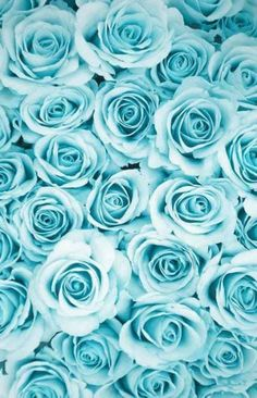 New flowers wallpaper iphone turquoise blue roses Ideas Wallpaper Tumblrs, Wallpaper World, Phone Background Wallpaper, Blue Wallpaper Iphone, Pastel Wallpaper, Blue Wallpapers, Flower Wallpaper, Blue Roses Wallpaper, Background Images