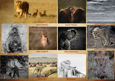 We are very grateful to our donors and well-wishers; we feel honored by your continued support. Thank you Andy Campbell, Rohan Patel, Amish Chhagan, Ben Carrick, Fahad Alshammari and Josien Suntjens for supporting The Maa Trust with your entries to The Greatest Maasai Mara photo competition. Photo Competition, Very Grateful, Amish, Trust, Places To Visit, Movie Posters, Film Poster, Billboard, Film Posters