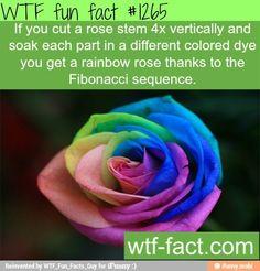 cool flower color hack
