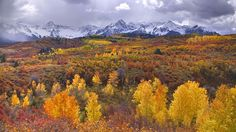 The aspen-covered mountains of Colorado