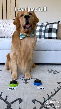 Dogs of tik tok viral Credits: @tuckerbudzyn Super Cute Puppies, Baby Animals Super Cute, Cute Baby Dogs, Cute Funny Dogs, Cute Cats And Dogs, Cute Dogs And Puppies, Cute Little Animals, Cute Funny Animals, Doggies