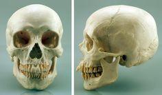human skull - Google Search