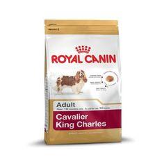 Cavalier Adult 1.5kg Cavalier King Charles, King Charles Spaniel, Fox Terriers, Border Terrier, Scottish Terrier, Yorkshire Terrier, Lamb Recipes, Dog Food Recipes, Cloture Anti Fugue