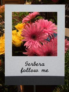 ガーベラ(フォロミー)#flower #shop #matilda #中目黒