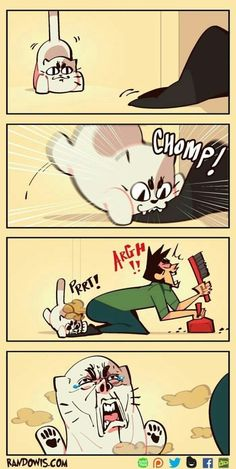 New Funny Anime Memes Humor Funniest Animals Ideas Neue lustige Anime Meme Humor Lustigste Tiere Funny Cartoon Pictures, Cartoon Jokes, Funny Cartoons, Funny Images, Cartoon Art, Anime Meme, Randowis Comics, Stupid Funny, Hilarious