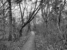 Woods Path In Gallows Hill In Salem Massachusetts. lets go hiking Haunted Places, Abandoned Places, Wood Path, Salem Mass, Salem Witch Trials, East Coast Road Trip, Go Hiking, Road Trippin, Vacation Spots