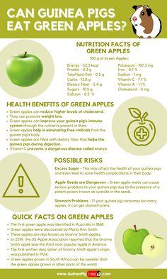 Diy Guinea Pig Toys, Guinea Pig Food, Cute Guinea Pigs, Guinea Pig Care, Pig Facts, Food Facts, Green Apple Benefits, Apple Nutrition Facts, Pig Diet