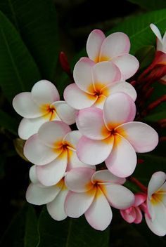 Beautiful flowers on Guam! One of my favorite places I've ever been.  The whole island smelled of flowers.