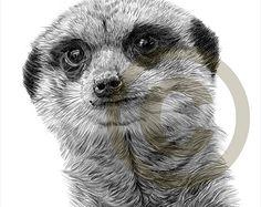 drawings meerkats - Google Search