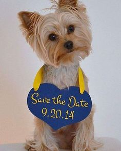 Olha, genteee, que ideia mais fofinha de Save The Date!!!!!! #savethedate #casamento #wedding #noivos #pet #dog #instadog #melhoramigo