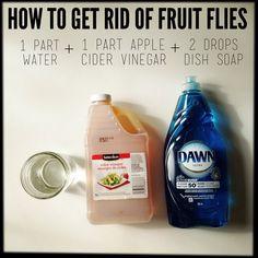 How to Get Rid of Fruit Flies.
