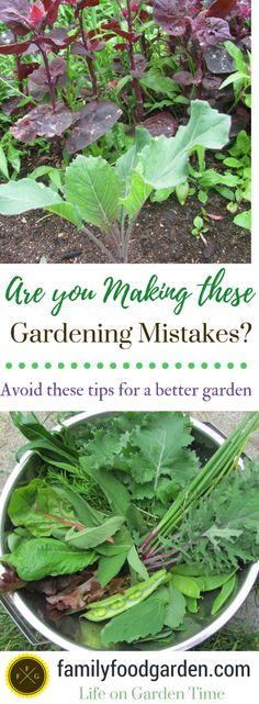 Beginner Gardening Mistakes to Avoid #gardening #vegetablegardening