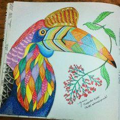 Toucan Milliemarotta Tropicalwonderland Milliemarottastropicalwonderland Coloringbook Beautifulcoloring Pentel Colourpencils Coloredpencils