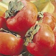 ...grows Persimmons in its forest.