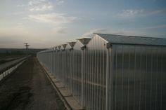 Topraksız tarım seraları arasında öncü olmayı hedefleyen firmamız profesyonel bir ekiple hizmet vermektedir. http://www.semayakas.com/topraksiz-tarim-seralari/ #semayakas