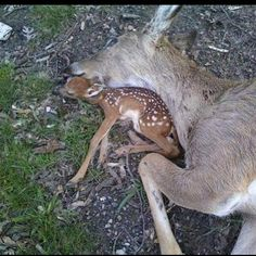 """When you kill an animal for sport, and it's a mother, you also eliminate its baby's chance of survival."" (via stopanimalcruelty0 on Facebook)"