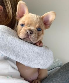 Dog And Puppies Bulldog .Dog And Puppies Bulldog Super Cute Puppies, Cute Baby Dogs, Cute Little Puppies, Cute Dogs And Puppies, Cute Little Animals, Cute Funny Animals, I Love Dogs, Doggies, Lab Puppies
