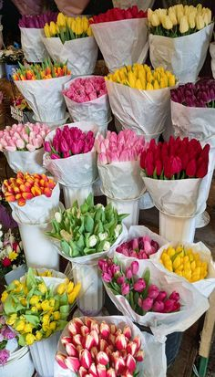 Flower Aesthetic, Summer Aesthetic, Aesthetic Plants, My Flower, Beautiful Flowers, Images Esthétiques, Flower Market, Aesthetic Pictures, Planting Flowers