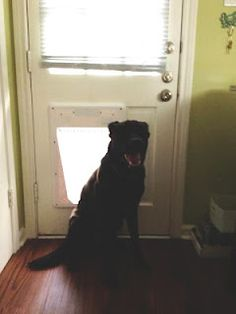 I thought this was going to end with a terrible game of Follow the Leader to understand the dog door, which was bound to be one heck of a Mishap.     How To: Teach a (not that) Old Dog New Tricks
