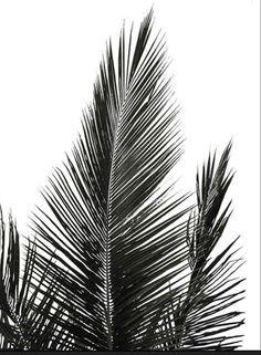Mustavalkoinen palmunlehti juliste Noora Savolaiselta. Abstract, Artwork, Shopping, Summary, Work Of Art, Auguste Rodin Artwork, Artworks, Illustrators