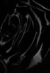 The color black <3