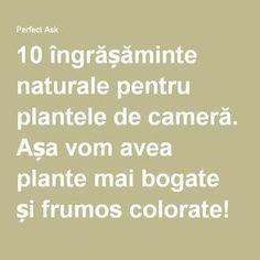 10 îngrășăminte naturale pentru plantele de cameră. Așa vom avea plante mai bogate și frumos colorate! - Perfect Ask How To Get Rid, Wisteria, Good To Know, Mai, Gardening, Landscaping, Bonsai, Gardens, Diet