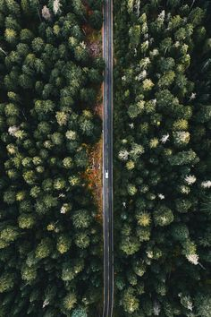ikwt: Tiny car or just really big trees? (alliemtaylor)...