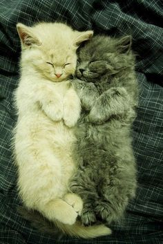 The one on the right looks like my Caney when she was a kitten.  Miss her :(