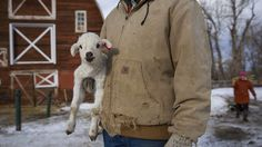 Montana's Spring Lambs. Blue Chalk is working with The Weather Channel to produce a series of short films to be shared across the web and ad...
