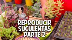Ideas para plantar suculentas - Trucos del Experto @cosasdeljardin