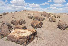 En Construcción: El Futuro de la Madera Petrificada