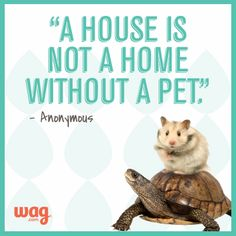 Pets make home sweet home a little sweeter <3