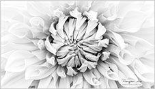 Geometria Floral
