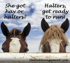 This is how are horses act! Lol! Or if they see a trailer back in!!