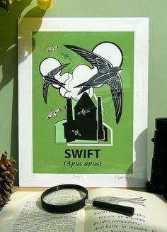 Swift Apus apus Giclée by ANaturalHistory, Mark Greco