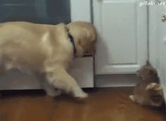 """""""OK, you kind of feel like a dog…"""" 22 Dogs Extremely Confused By Cats Cute Cats And Dogs, I Love Dogs, Animals And Pets, Funny Animal Pictures, Cute Funny Animals, Cute Puppies, Dogs And Puppies, Doggies, Game Mode"""