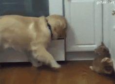 Pet the Kitty