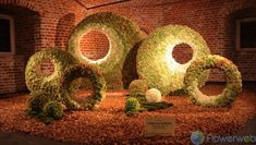 """""""Circles of Life"""" by Robin Van Nuffelen  Robin just loves the fact the Hydrangeas will change colour over time and decided to something with that.  Therefore he named his project """"Circles of life"""" http://www.flowerweb.com/en/article/172272"""