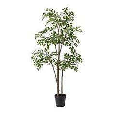 Portavasi, piante e supporti - Piante - IKEA