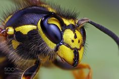 insects by veral8770