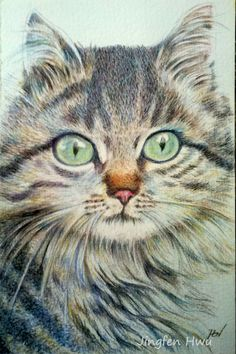 """cat drawing  """"A Handsome Cat """"  long hair cat , furry cat, maine coon"""